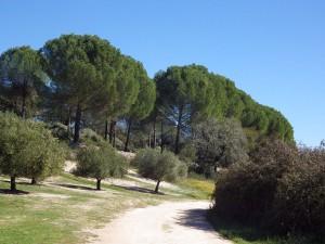Arroyo de las Cañas (El Pedroso)